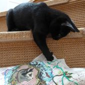 LE CHAT EUGENE - BLOG A ZONZON