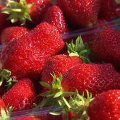 Fruits et légumes, poissons, fruits de mer... les produits estivaux sont de retour sur les marchés