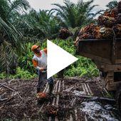 La pression monte : fermons les vannes de l'huile de palme !