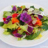 Défi Cuisine : Cuisine Multicolore