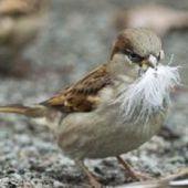 421 millions d'oiseaux disparus en Europe en 30 ans