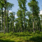 Quand l'ONF décide de vendre ses petites forêts