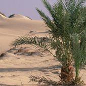 Le Sahara est plus vieux que prévu