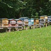 Abeilles - L&rsquo&#x3B;apiculture confrontée à sa pire année de récolte