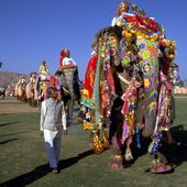 Top Jaipur Elephant Festival Images for Pinterest