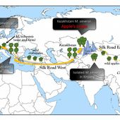 New genomic insights reveal a surprising two-way journey for apple on the Silk Road - Scienmag: Latest Science and Health News