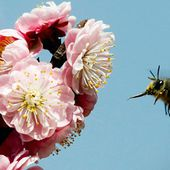 Bees and plants communicate via electric signals, say scientists