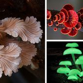 The Magical World Of Australian Mushrooms By Steve Axford