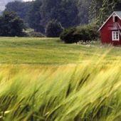 2020 : La culture du blé se déplace vers le nord