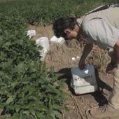 """Les OGM """"bientôt dans nos assiettes"""", le docu investigation de la rentrée"""