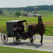 Amish - Wikipédia