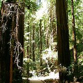 Muir Woods National Monument - Wikipédia