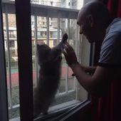 Window cat's