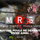 [Pétition] Multi Restauration Services : stop aux œufs de poules en cage !