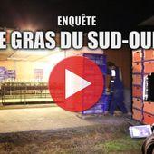 Canards et foie gras | Éthique et animaux
