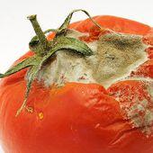 Boom import pomodori cinesi: e li spacciano per italiani...