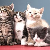 Ile-de-France : chats abandonnés cherchent famille - Fondation 30 Millions d'Amis