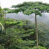 A la atención de la mujer guineana, Guinea Ecuatorial: Homenaje. - El Muni
