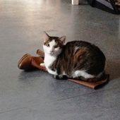 chiens chats mode d'emploi - PASSIONS ACTUALITES