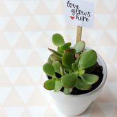 Valentine's Potted Plant and Free Printable