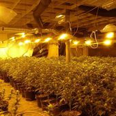 Puglia vara legge cannabis terapeutica