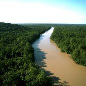 Actualité de la filière bois en Guyane