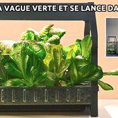Ikea surfe sur la vague verte et se lance dans l'hydroponie - Aquaponie France