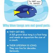Don't Get a Dory! - Beatrice the Biologist
