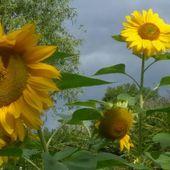Cuisine plantes sauvages - Boutique Jardin Gourmand