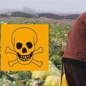 Planetoscope - Statistiques : Consommation de pesticides dans le monde