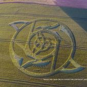 Crop Circle at The Ridgeway, nr Hackpen Hill, Wiltshire. Reported 23rd June 2016