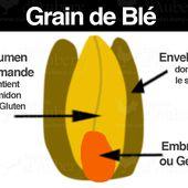 Les Types de Farine : Quelle farine pour quel usage ?