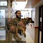 Des chiens errants de Sotchi trouvent refuge aux Etats-Unis