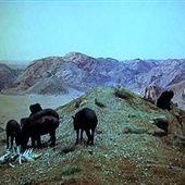 Kubrick a réalisé Shining comme un message codé nous révélant le secret d'Appollo 11 - rusty james news