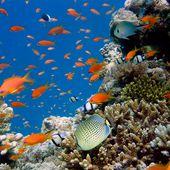 Journée mondiale de l'océan : une ressource menacée à préserver