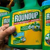 Royal veut interdire la vente de Roundup aux particuliers dès le 1er janvier 2016