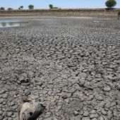 L'invention d'une Sud-Africaine de seize ans pour lutter contre la sécheresse
