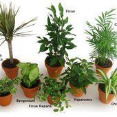 Liste des plantes dépolluantes qui purifient l'air de nos intérieurs