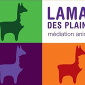 formation mediation animale