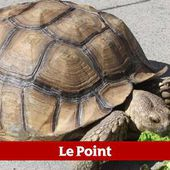 Tortues, lézards, serpents : attention danger