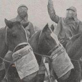 14-18 : des chevaux dans la guerre