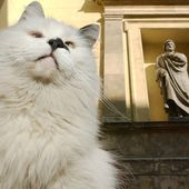 Russia's Museum Cats