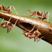 Les piqûres de guêpes, d'abeilles et de fourmis les plus douloureuses : l'échelle de Schmidt (vidéo)