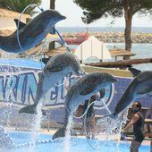 """Derrière le """"spectacle familial"""", la violence du dressage des dauphins au Marineland de Majorque (vidéo)"""