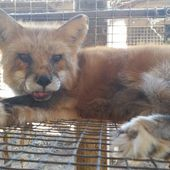 Urge Retailer Patricia Nash to End Fur Sales