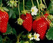 Accueil | Promété - Créateur de portails Agro-Climatiques