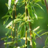 6 meilleurs extraits de plantes anti-vieillissement identifiés par des chercheurs