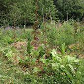 Chronique du jardin sans pétrole - Les salades sont devenues des tours - Le nouveau Paradigme