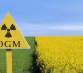 Les insectes résistent de plus en plus aux OGM insecticides - Reporterre