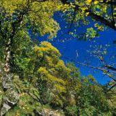 Frankenthal-Missheimle   RESERVES NATURELLES DE FRANCE